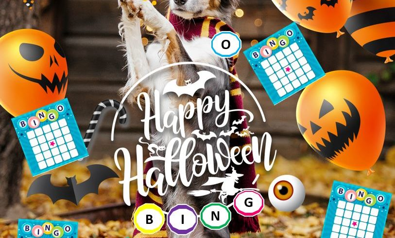 ZOOM BINGO 30th October 17h00 to 19h00